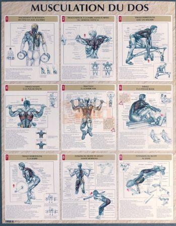 exercices pour la musculation du dos