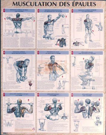 exercices pour la musculation des épaules