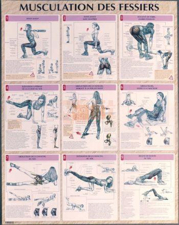 exercices pour la musculation des fessiers