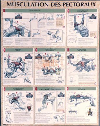 exercices pour la musculation des pectoraux